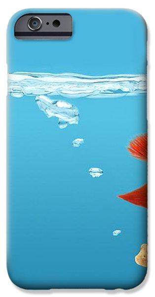 Siamese Fighting Fish Betta Splendens iPhone Case by Don Hammond