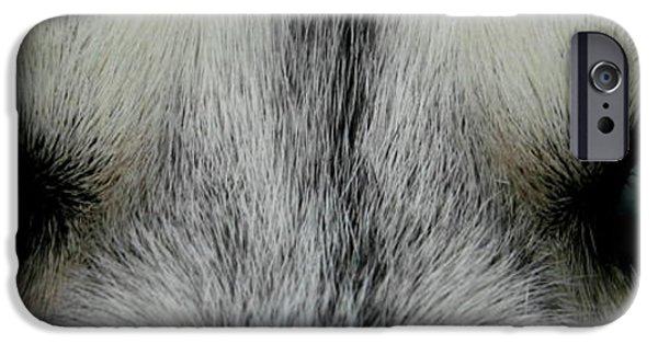 Husky iPhone Cases - Siberian Eyes iPhone Case by David Dunham