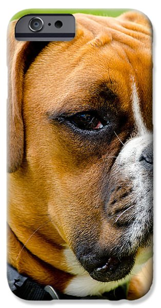 Sidney The Boxer iPhone Case by Chris Thaxter