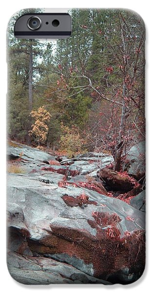 Sierras iPhone Cases - Sierra Nevada Forest 1 iPhone Case by Naxart Studio