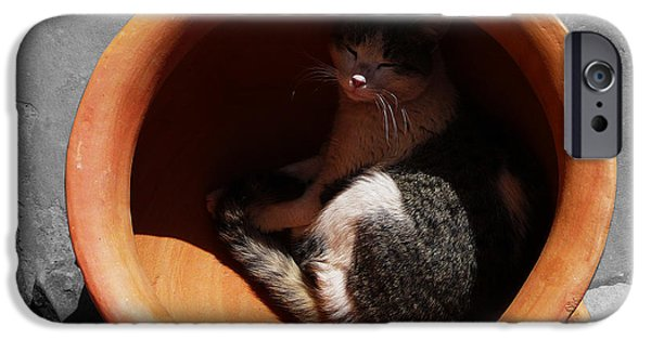 Pictures Of Cats Photographs iPhone Cases - Siesta 1 iPhone Case by Xueling Zou