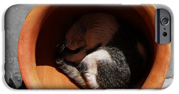 Pictures Of Cats Photographs iPhone Cases - Siesta 2 iPhone Case by Xueling Zou