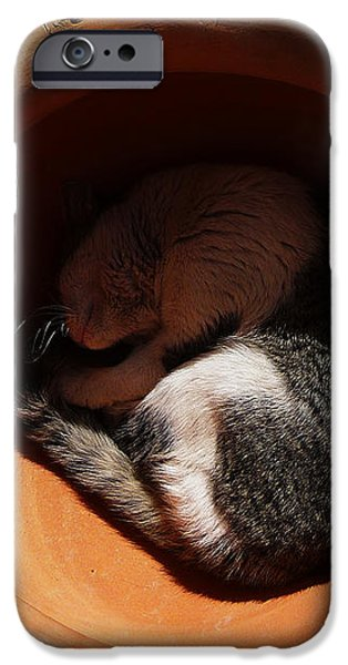 Siesta 2 iPhone Case by Xueling Zou