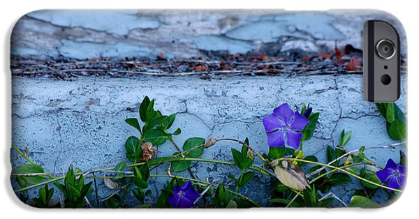 Fort Bayard iPhone Cases - Signs of Spring iPhone Case by Vicki Pelham