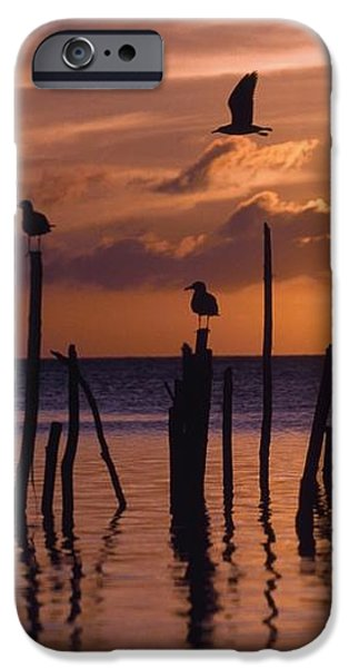 Silhouette Of Seagulls On Posts In Sea iPhone Case by Axiom Photographic