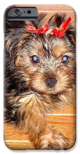 Dog Close-up iPhone Cases - Silky Terrier Puppy iPhone Case by Sue Melvin
