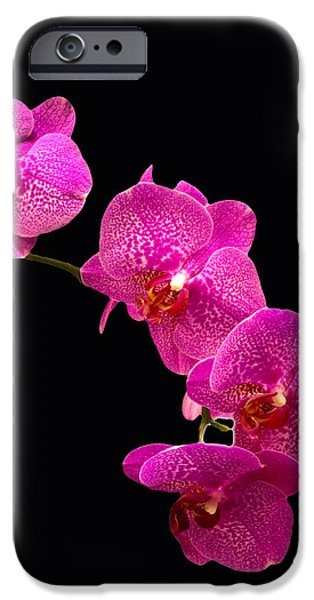 Close Pyrography iPhone Cases - Simply Beautiful Purple Orchids iPhone Case by Michael Waters