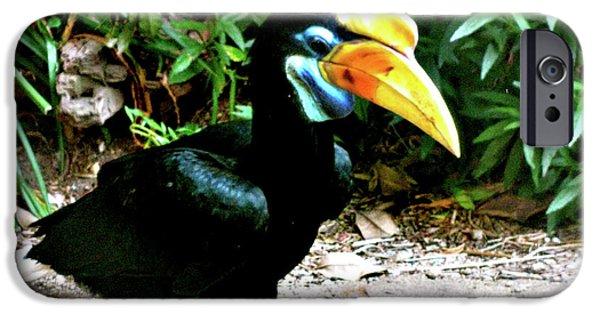 Animal Photograph Mixed Media iPhone Cases - Singel Toucan iPhone Case by Debra     Vatalaro
