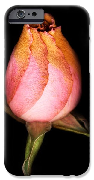Florals Photographs iPhone Cases - single Rose iPhone Case by Marilyn Hunt