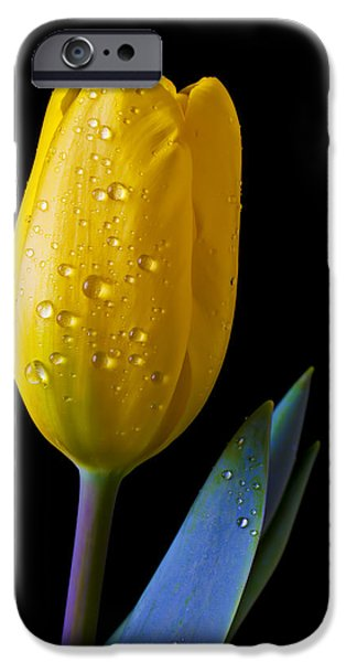 Single Yellow Tulip iPhone Case by Garry Gay