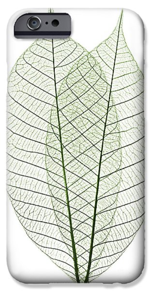 Thin iPhone Cases - Skeleton leaves iPhone Case by Elena Elisseeva
