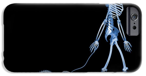 Wildlife Imagery iPhone Cases - Skeleton Walking A Marmoset, X-ray iPhone Case by D. Roberts