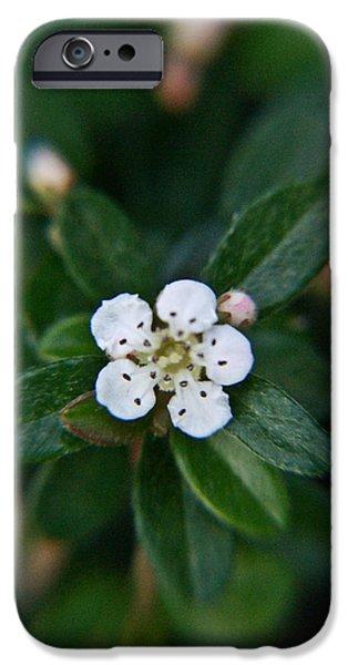 Rosaceae iPhone Cases - Skull Ghost Flower 1 iPhone Case by Douglas Barnett