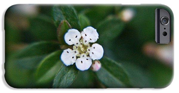 Rosaceae iPhone Cases - Skull Ghost Flower 2 iPhone Case by Douglas Barnett