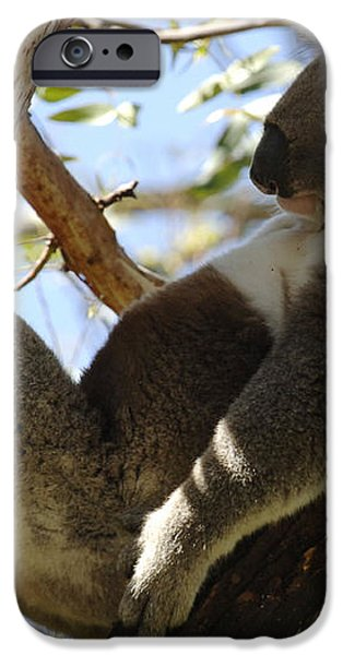 Sleeping Koala iPhone Case by Bob Christopher