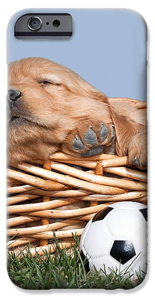 Sleeping Puppies in Basket and Toy Ball iPhone Case by Cindy Singleton