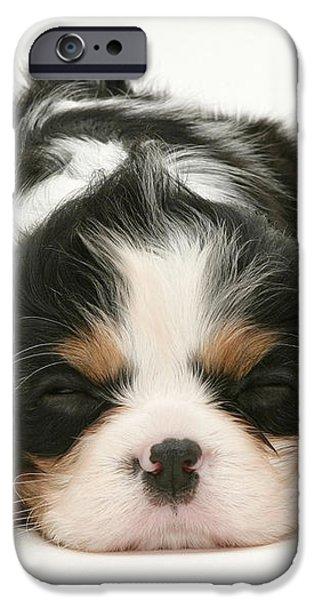 Sleeping Puppy iPhone Case by Jane Burton