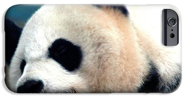 Smithsonian iPhone Cases - Sleepy Panda iPhone Case by LeeAnn McLaneGoetz McLaneGoetzStudioLLCcom