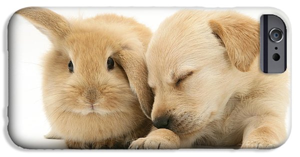 Cute Puppy iPhone Cases - Sleepy Puppy And Rabbit iPhone Case by Mark Taylor