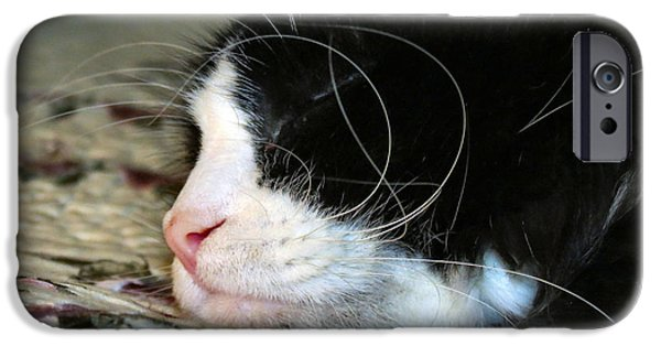 Witch Halloween Cat Wicca Photographs iPhone Cases - Sleepytime iPhone Case by Michelle Milano