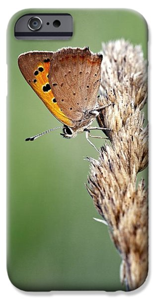 Small iPhone Cases - Small Copper Butterfly iPhone Case by Jerzy Gubernator