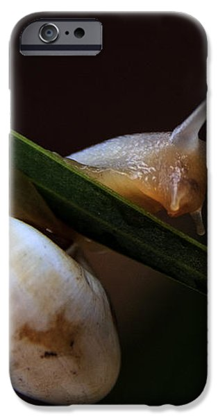 snail iPhone Case by Stylianos Kleanthous
