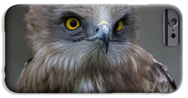 Serpent iPhone Cases - Snake Eagle 1 iPhone Case by Heiko Koehrer-Wagner