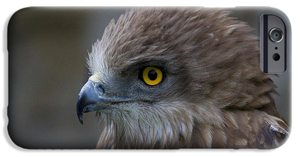 Serpent iPhone Cases - Snake Eagle 3 iPhone Case by Heiko Koehrer-Wagner