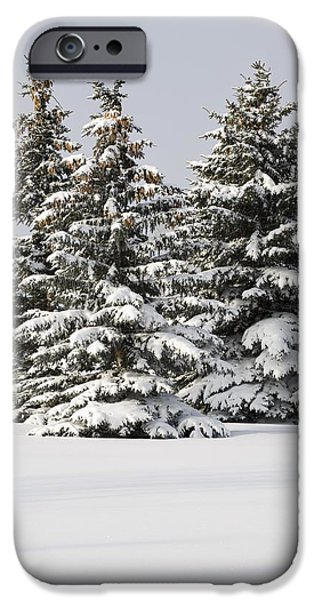 Snow Covered Evergreen Trees Calgary iPhone Case by Michael Interisano