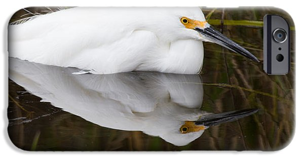 Water iPhone Cases - Snow Egret Reflection iPhone Case by Andres Leon