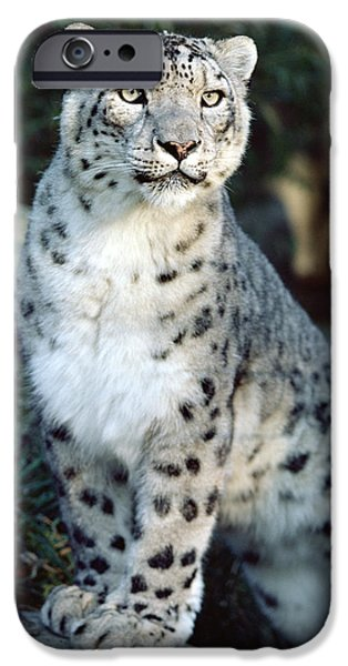 U.s.a. iPhone Cases - Snow Leopard Uncia Uncia Portrait iPhone Case by Gerry Ellis