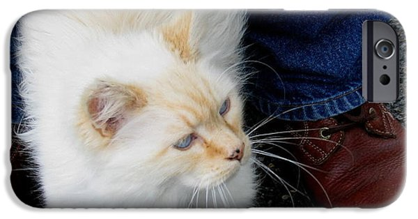 Flame Point Siamese iPhone Cases - Snowbell Making Friends iPhone Case by Rory Sagner