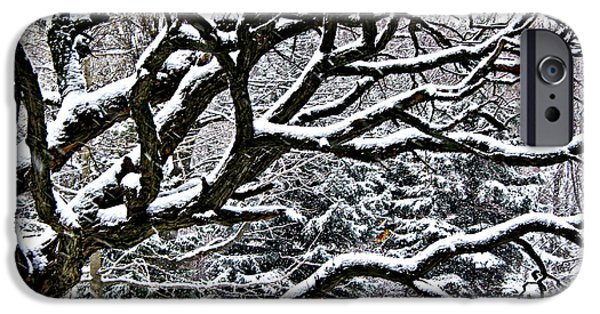 Old Trees iPhone Cases - Snowfall and tree iPhone Case by Elena Elisseeva
