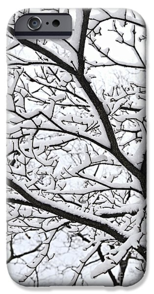 Winter iPhone Cases - Snowy branch iPhone Case by Elena Elisseeva