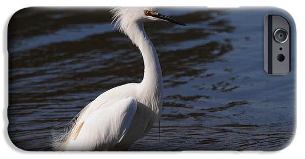 Snowy Day iPhone Cases - Snowy Egret . Bad Hair Day . 7D11892 iPhone Case by Wingsdomain Art and Photography