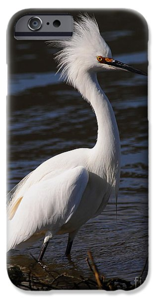 Snowy Day iPhone Cases - Snowy Egret . Bad Hair Day . Vertical Cut . 7D11892 iPhone Case by Wingsdomain Art and Photography