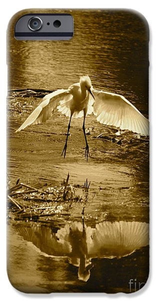 Snowy Day iPhone Cases - Snowy Egret Landing with Golden Tones iPhone Case by Carol Groenen