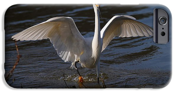 Snowy Day iPhone Cases - Snowy Egret . Maybe They Wont Notice My Bad Hair Day If I Show My Eagle Stance . 7D11890 iPhone Case by Wingsdomain Art and Photography