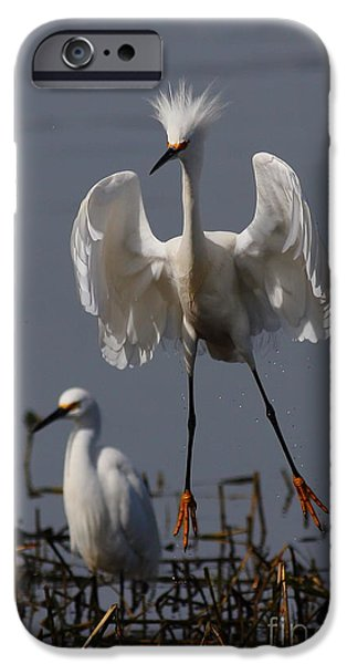 Snowy Day iPhone Cases - Snowy Egret . They Call Me Happy Feet Too . 7D12044 iPhone Case by Wingsdomain Art and Photography