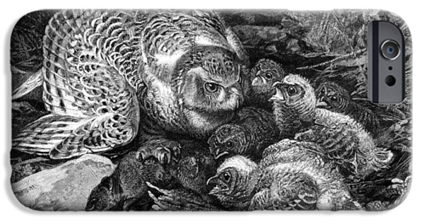 Feeds Chicks iPhone Cases - Snowy Owl And Chicks, 19th Century iPhone Case by