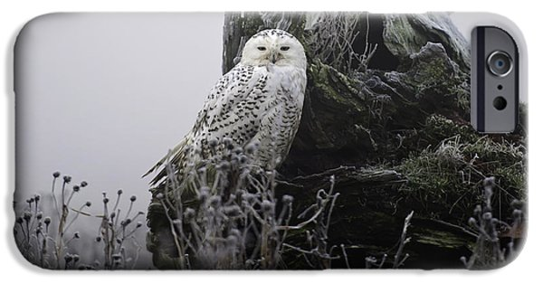 Snowy iPhone Cases - Snowy Owl in the Fog 1 iPhone Case by Andrew Campbell