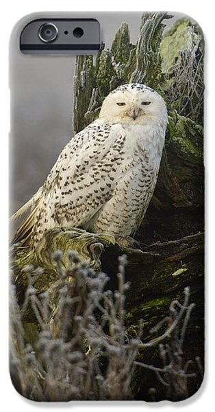 Snowy iPhone Cases - Snowy Owl in the Fog 2 iPhone Case by Andrew Campbell