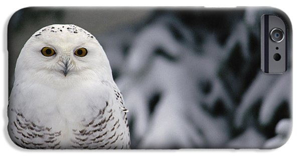Recently Sold -  - Fauna iPhone Cases - Snowy Owl Nyctea Scandiaca Camouflaged iPhone Case by Gerry Ellis