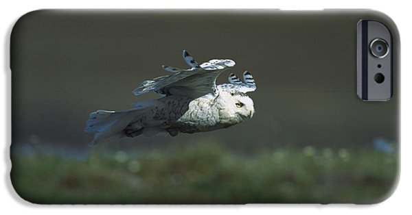 Snowy Day iPhone Cases - Snowy Owl Nyctea Scandiaca Flying iPhone Case by Konrad Wothe