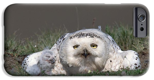 Snowy Day iPhone Cases - Snowy Owl Nyctea Scandiaca Mother iPhone Case by Konrad Wothe