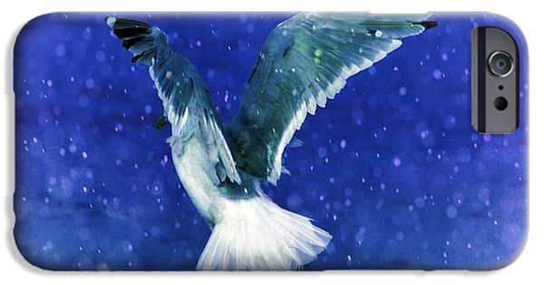Seagull iPhone Cases - Snowy Seagull iPhone Case by Debra  Miller
