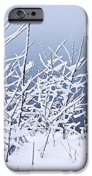 Snowy trees iPhone Case by Elena Elisseeva