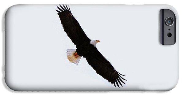 West Fork iPhone Cases - Soaring Eagle iPhone Case by Don Mann