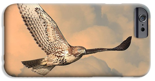 Flight iPhone Cases - Soaring Hawk iPhone Case by Wingsdomain Art and Photography