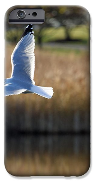 Flying Seagull iPhone Cases - Soaring iPhone Case by Lauri Novak